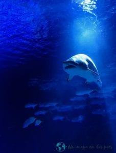 Oceanografic-Valencia-